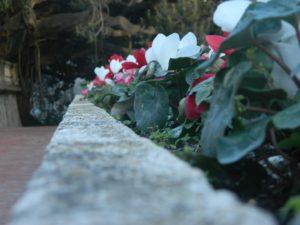 """Un piccolo """"frame"""" dei giardini di Villa Ormond"""