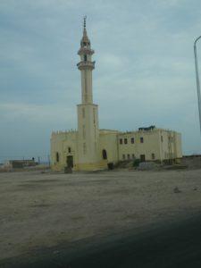 Piccola Mosche sulla strada tra Marsa Alam e Berenice