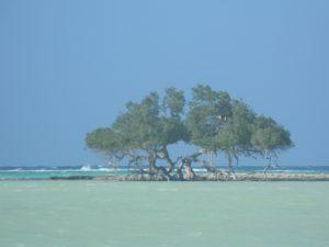 Altra stupenda Mangrovia