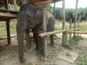 Il povero elefante...