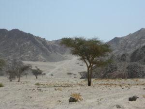 Scorcio del deserto roccioso