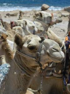 """Il """"mio"""" cammello per qualche minuto"""