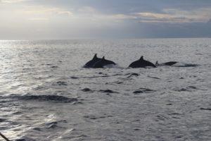 Avvistamento Delfini - 1