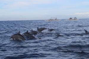 Avvistamento Delfini - 2