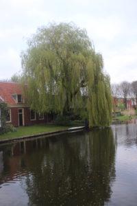 Particolare immagine di un canale di Utrecht