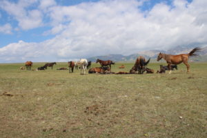 Una piccola parte dei cavalli liberi di questa valle