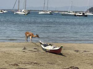 Uno dei Daini sul mare