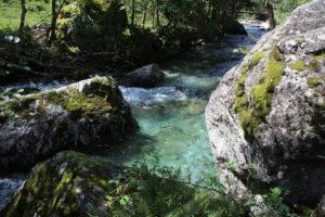 Altro particolare del fiume