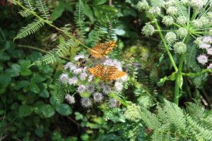 Coloratissime farfalle