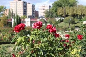 """Scorcio del Parco """"La Rosaleda"""""""