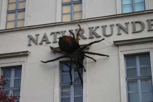 Tarantola gigante sulla facciata del Museo di Storia Naturale