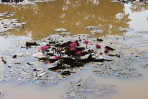 I fiori - unica cosa che si salva del laghetto