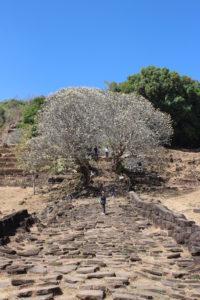 Wat Phou - Parte della Scalinata Monumentale