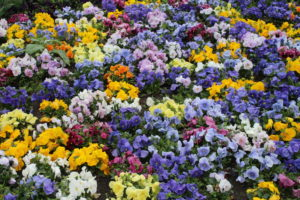 Esempio di Aiuole floreali