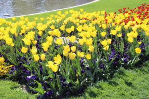 Misera parte dei fiori di Friedrichsplatz