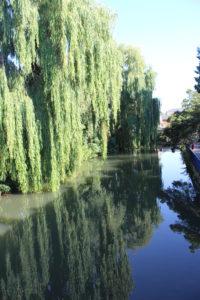 Il Tamigi ad Oxford