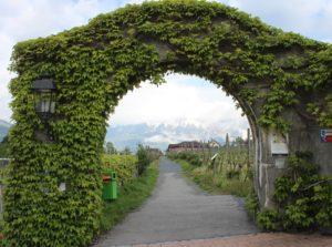 Montagne dietro l'arco di vegetazione