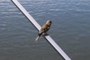 Uccellino che mi chiama