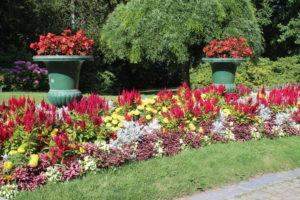 Parc de Mon Repos - esempio di fiori colorati