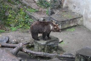 Orso al Castello di Cesky Krumlov - 2