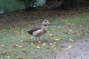 Uno dei residenti del Laghetto di Parc Leopold