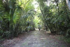 La foresta pluviale del Parco di Tikal