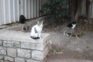 I Gatti di Istanbul - 1