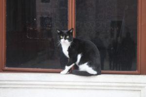 I Gatti di Istanbul - 2