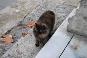 I Gatti di Istanbul - 3