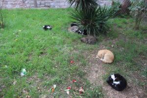 I Gatti di Istanbul - 5