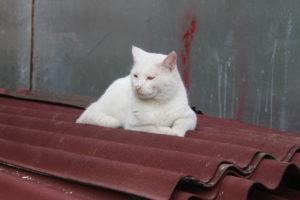 I Gatti di Istanbul - 6