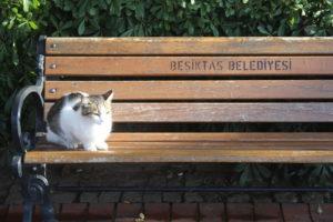 I Gatti di Istanbul - 7