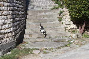 Il vincitore della battaglia tra gatti va via fiero e baldanzoso
