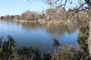 Parku i Madh Kodrat i Liqenit - 4