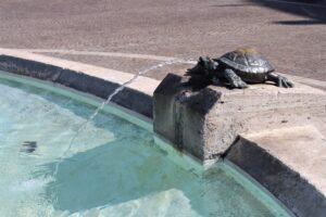 Fontana delle Tartarughe - dettaglio