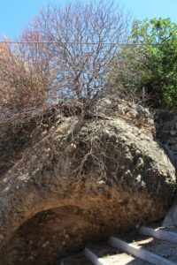 Pentedattilo - vegetazione tipica 2