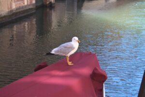 Venezia - 37