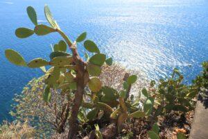 Corniglia - veduta dalla terrazza panoramica