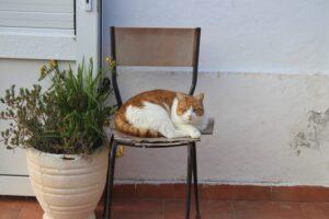 Gatti di Ponza - 2