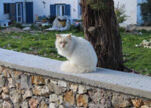 Gatti di Ponza - 3
